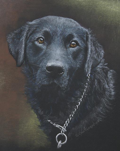 """Black Labrador"""