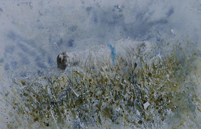 """Blue Sheep"""