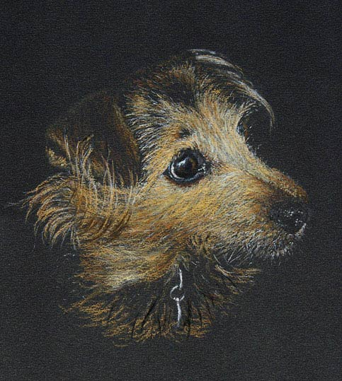 Bunty Commissioned pastel dog portrait on black paper. Unframed size c. 26 x 26cm.
