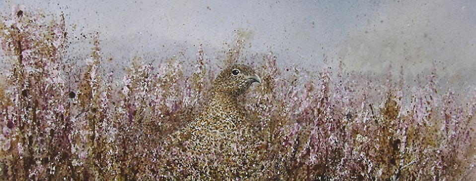 Red Grouse Hen watercolour portrait