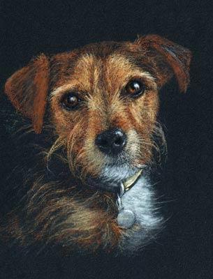 Freddie, Jack Russell Terrier dog pastel portrait painting