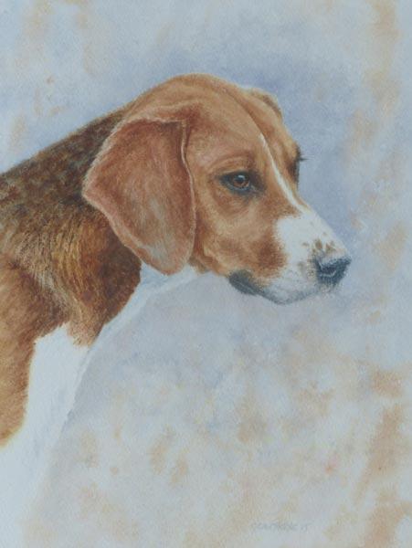 Patience 2 - watercolour portrait of a hound