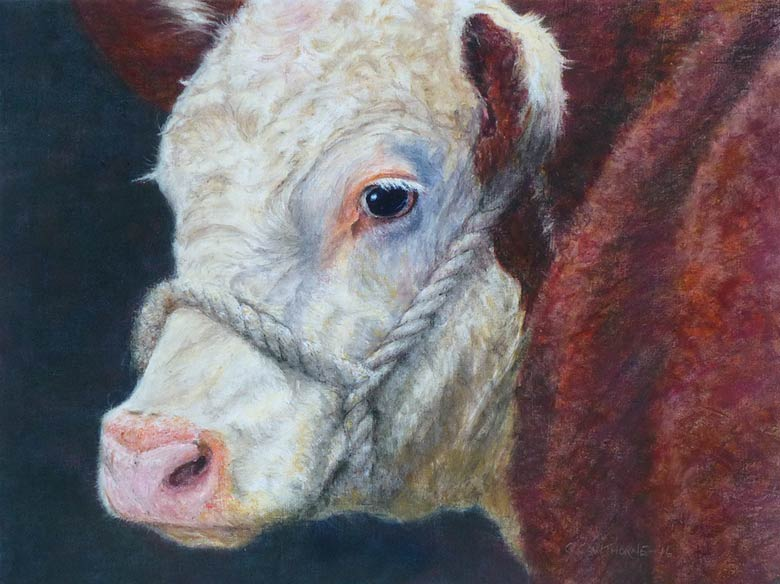 Hereford Cow Watercolour