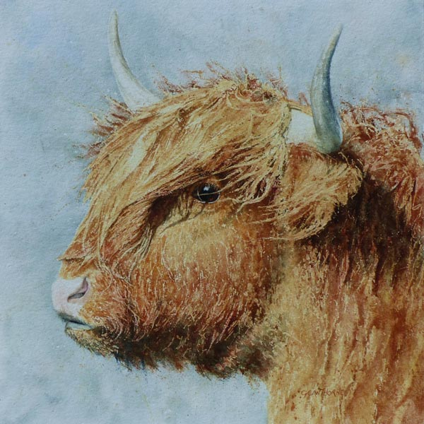 Highland Cow Felicity, watercolour