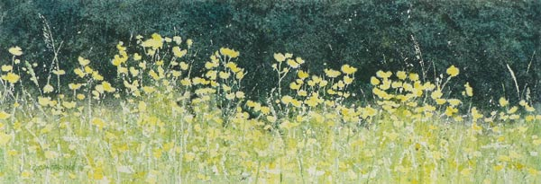 Watercolour painting of buttercups by Gillie Cawthorne