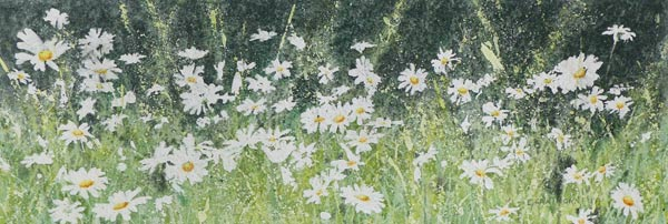 Daisies1, painting by Gillie Cawthorne