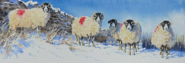Snowy Swaledale Sheep painting by Gillie Cawthorne