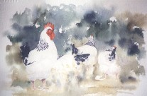 Harem – watercolour painting of Light Sussex cock and hens