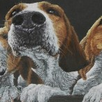 Curiosity – pastel painting of hounds