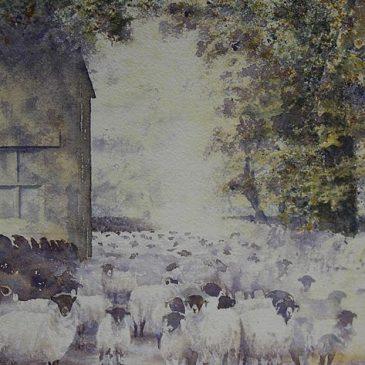 Aimshaugh Sheep