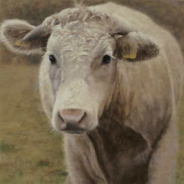 Bos Junior – pastel painting, cattle