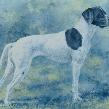 Off Duty – watercolour portrait of a Pointer dog