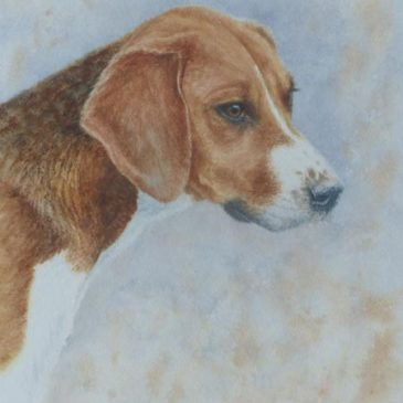 Patience 2 – watercolour portrait of a hound