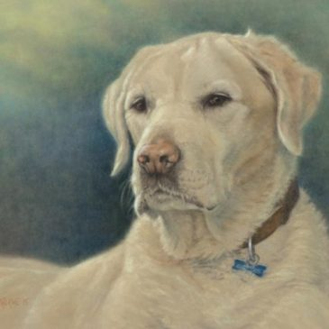 Simba – pastel portrait of Labrador dog