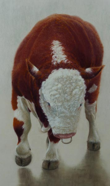 Hereford Bull Pastel Painting