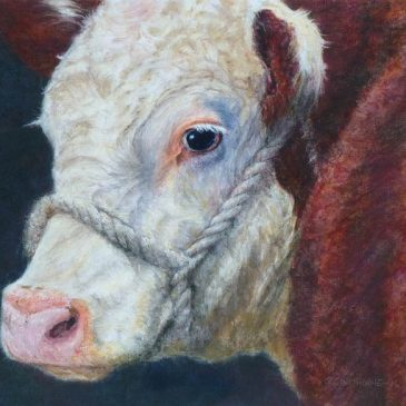 Hereford Cow pastel