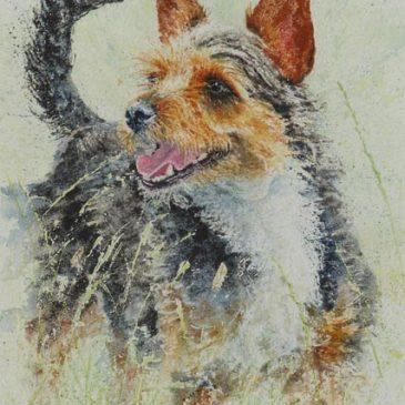Sparky Terrier