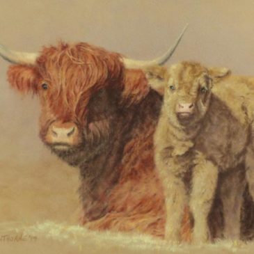 Highland Cow and Calf pastel painting