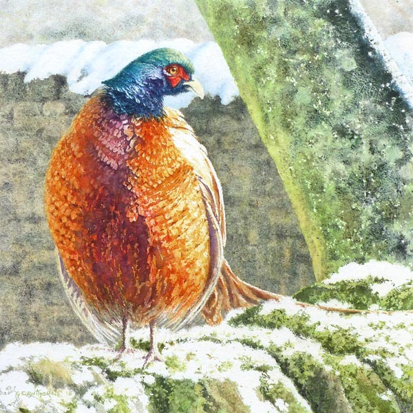Winter Pheasant, Feathers Fluffed, painting by Gillie Cawthorne