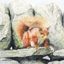 Off The Wall red squirrel painting by Gillie Cawthorne