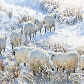 Zig Zag Sheep watercolour painting by Gillie Cawthorne