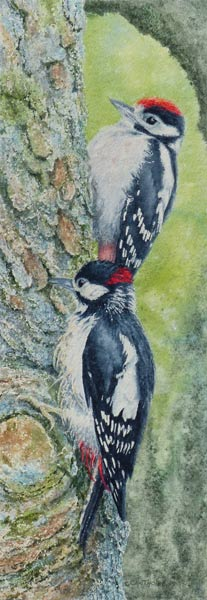Woodpeckers painting by Gillie Cawthorne
