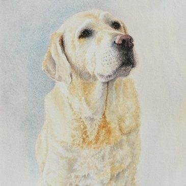 Golden Retriever Watercolour Commission