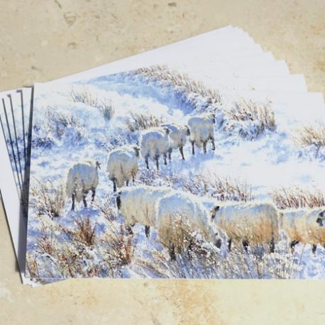 Zig Zag Sheep Christmas Card Pack of 5