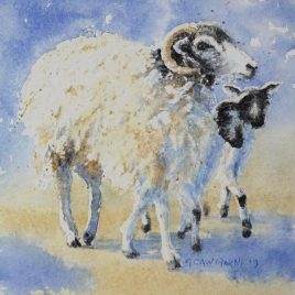 Swaledale Ewe and Twin Mule Lambs watercolour