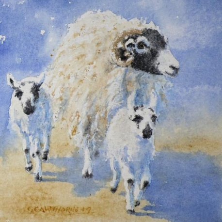 """Swaledale Ewe and Twin Mule Lambs 1"" watercolour"